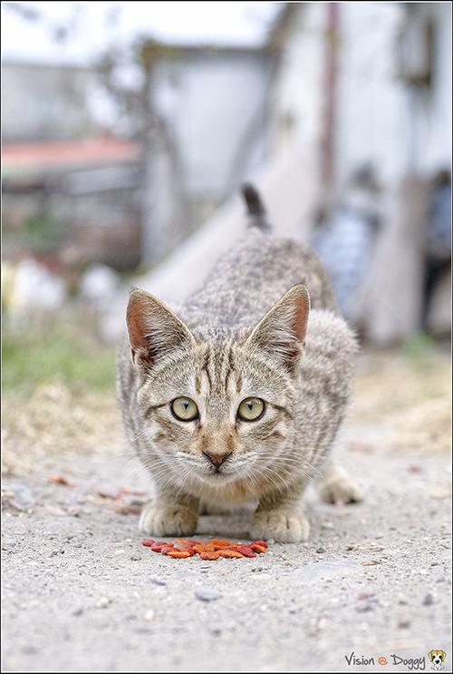 http://blog.hunternet.com.tw/wp-content/uploads/2018/09/cat-20170205-05.png