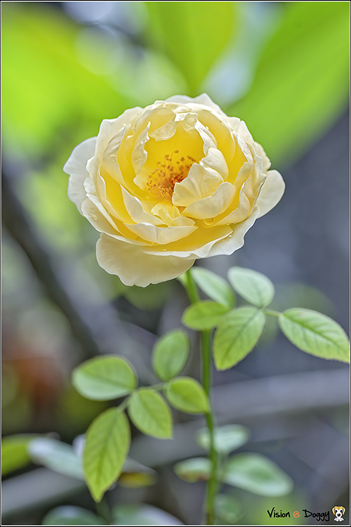 http://blog.hunternet.com.tw/wp-content/uploads/2019/09/pic-20190905-01-rose.png